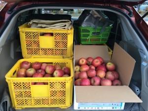 もう一枚オマケ。これは昨年のリンゴ運びシーン。軽トラもあるんですが、長野県山ノ内町まで取りに行くのが、楽なんです、コレオスくん。でっかいケース10個は入ります。雪道もなんのその。すごいでしょ♪
