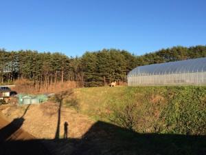 山羊と自然の広大さ。草もまだまだありましたが、この雪で今日は覆われてしまただろうなあ。