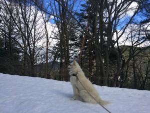 まあワンコは雪が降ってもなんとかなるんですが、馬と山羊は大変でした。