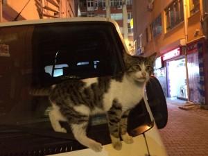 猫ちゃんともしばし遊んだよ。イスタンブール入り口で帰るのはもったいないかもね〜。